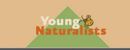 Minnesota Conservation Volunteer Young Naturalists